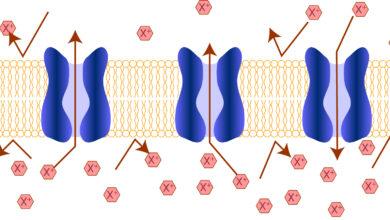 الانتشار هي عملية انتقال الجزيئات من المناطق ذات التركيز المنخفض إلى المناطق ذات التركيز المرتفع