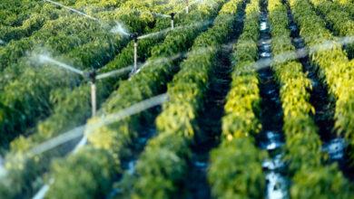 ذكر مناطق انتشار أهم المحاصيل الزراعية في المملكة