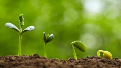 قارن بين خصائص النباتات الوعائية والنباتات اللاوعائية