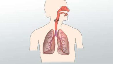 ماذا يجب ان يحدث لجزيئات الطعام لكي تتم عملية التنفس