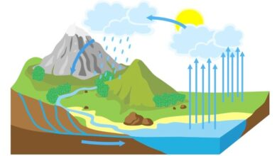 تؤثر دورة الماء وحصول الهطول على الطقس