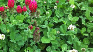 في فصل الصيف تفرز النباتات الزيوت العطرية من أجل أنْ