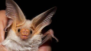ما الدليل من القصه على ان الطيور لا تخاف من الخفافيش