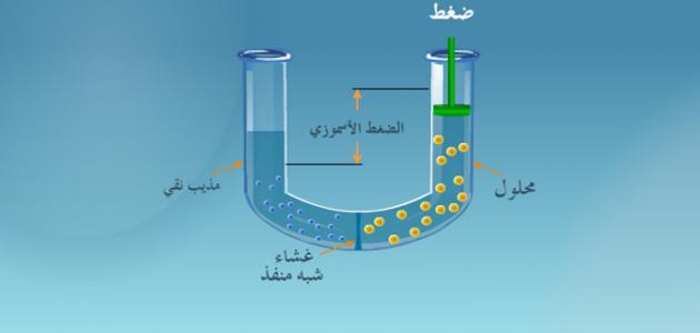 الخاصية الاسموزية هي حركة الماء من الخلية واليها