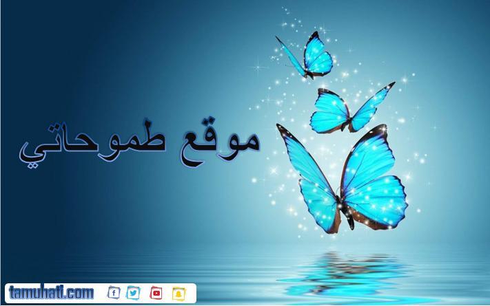 كلمات شيلة ياغزال الحور ياست البنات