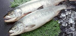 تنتمي سمكة السلمون لطائفة الأسماك العظمية ؟