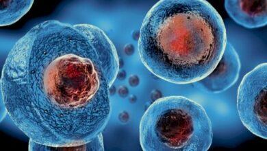 ما الأهمية الحيوية لجزيء atp لخلايا المخلوقات الحية؟