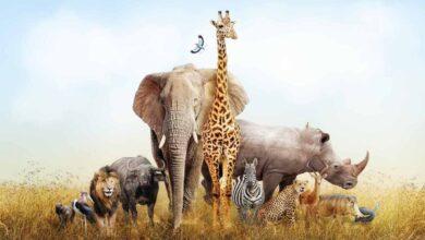 صنف العالم أرسطو الحيوانات تبعاً ل ؟